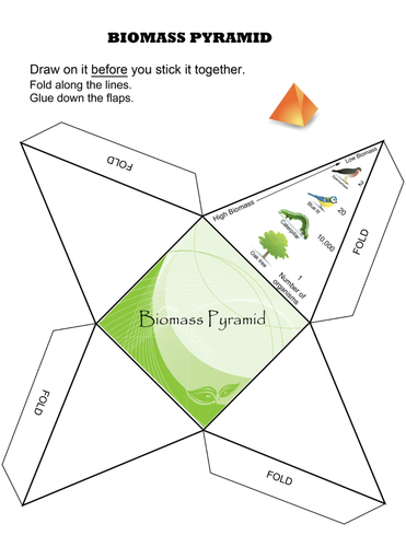 Make a Biomass Pyramid