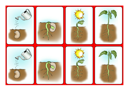Science - Sequencing Growing a Bean with symbols