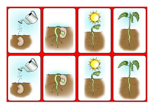 how to grow cress ks1