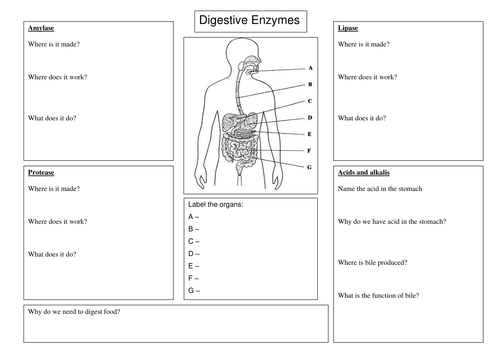 Digestive enzyme worksheet by spinkydoodle Teaching Resources TES – Digestion Worksheet