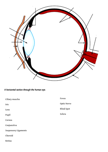 Labelled eye diagram gcse periodic diagrams science the eye diagram to label by canonuk teaching resources tes ccuart Gallery