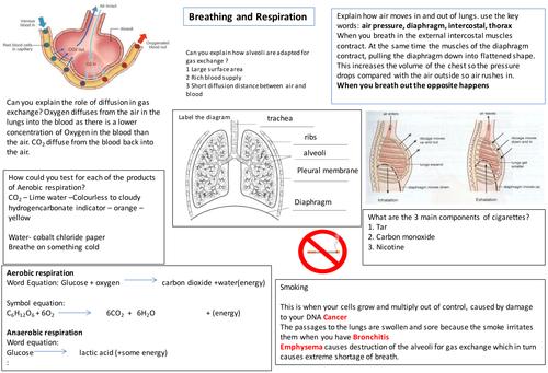 IGCSE Respiration learning mat by kfmr20 Teaching Resources Tes – Aerobic Respiration Worksheet