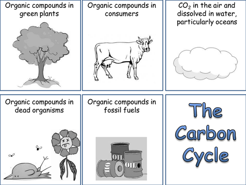 carbon cycle card sort by whitney77 teaching resources tes. Black Bedroom Furniture Sets. Home Design Ideas