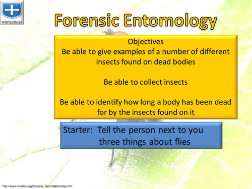 Forensic Entomology by kevinbetts1 Teaching Resources Tes – Forensic Entomology Worksheet