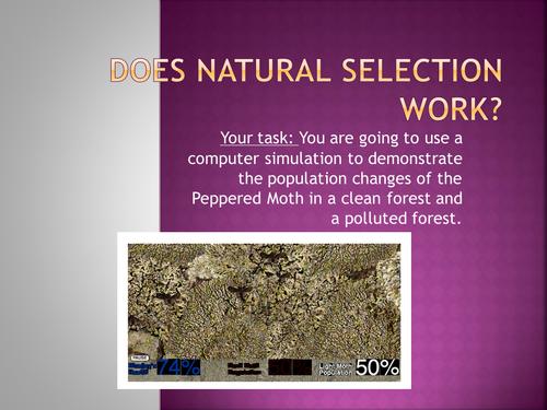Natural Selection Computer Simulation