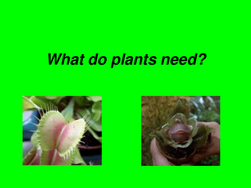 What do Plants Need?