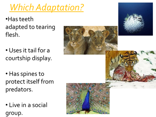 Competition in Animals | Teaching Resources