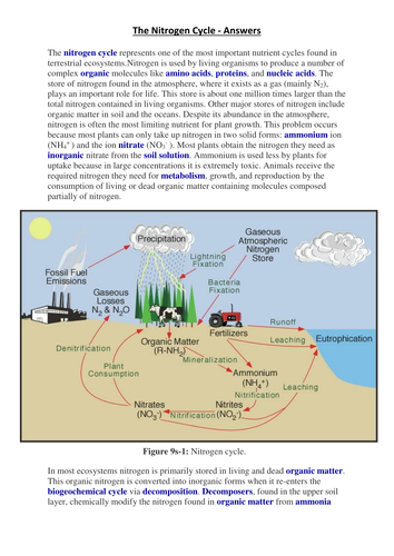 Nitrogen Cycle fill the gaps by nicdg - Teaching Resources - Tes