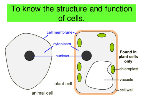 Plant Vs Animal Cells By Lrcathcart Teaching Resources Tes