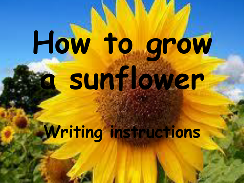 Instructional Writing How To Grow A Sunflower By Hvcarter