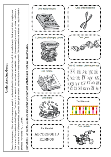 Worksheets Chromosome Worksheet btec chromosomes genes dna by indigoandviolet teaching resources tes