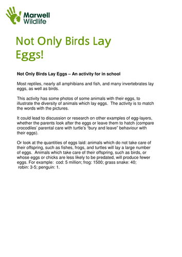 Not only birds lay eggs by MarwellWildlife - Teaching Resources - Tes