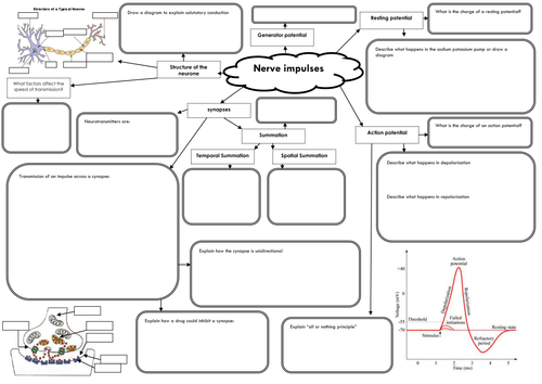 unit 5 aqa revision mind map for nerves by ruthgillott
