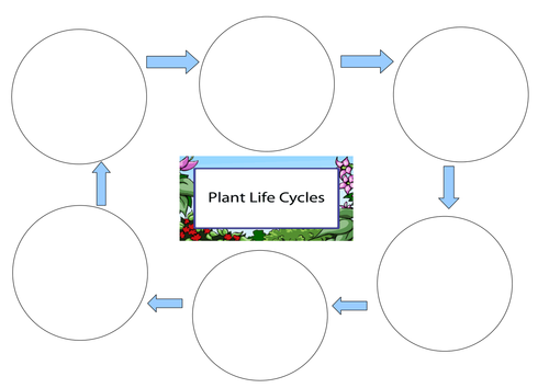 Life Cycle of a Plant Worksheet by pantobabe Teaching Resources – Plant Cycle Worksheet