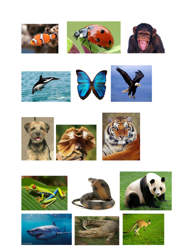 Classifying Animals Worksheet and Pictures
