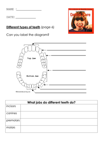Teeth worksheet by simonh teaching resources tes teeth ccuart Images