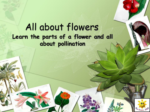 Plants flowers and pollination powerpoint by bevevans22 teaching plants flowers and pollination powerpoint by bevevans22 teaching resources tes ccuart Images