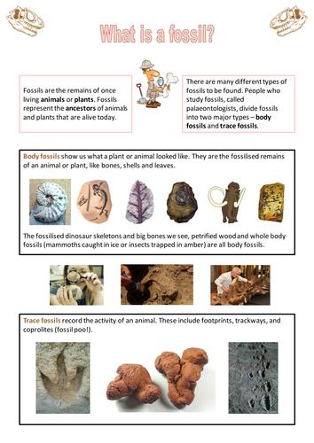 Fossils Factsheet By Neanderthalchick Teaching Resources