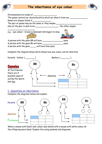 Inheritance of eye colour by km152 teaching resources tes ccuart Images