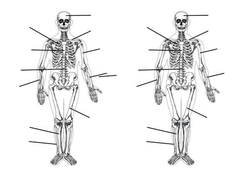 Skeletal System by blueskiesmev Teaching Resources Tes – Skeletal System Worksheet