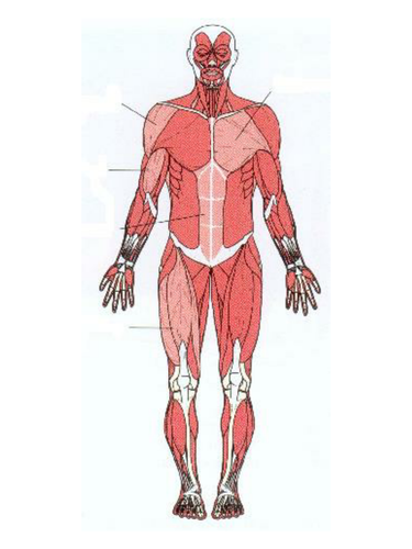 Label The Muscles By Damo3132 Teaching Resources