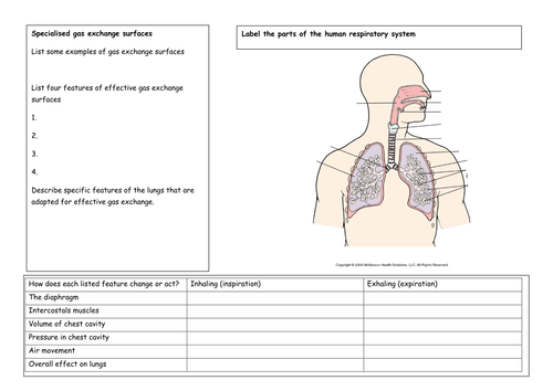 Exchange and breathing revision worksheets by solefish teaching exchange and breathing revision worksheets by solefish teaching resources tes ccuart Images