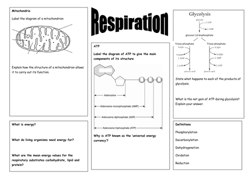Respiration Glycolysis ATP ppt exam questions by – Atp Worksheet