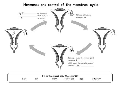 {B11 Menstrual Cycle for SEN by hannahradford Teaching Resources – Menstrual Cycle Worksheet