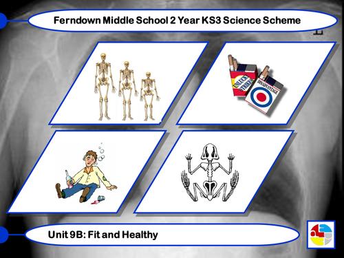 PowerPoint on The Human Skeleton