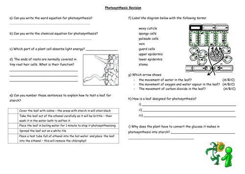 Photosynthesis Revision Sheet By Seasquirt Teaching
