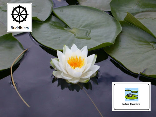 Buddhism lotus flower by jovest teaching resources tes mightylinksfo