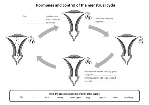 B11 hormones menstrual cycle aqa core science by hannahradford b11 hormones menstrual cycle aqa core science by hannahradford teaching resources tes ccuart