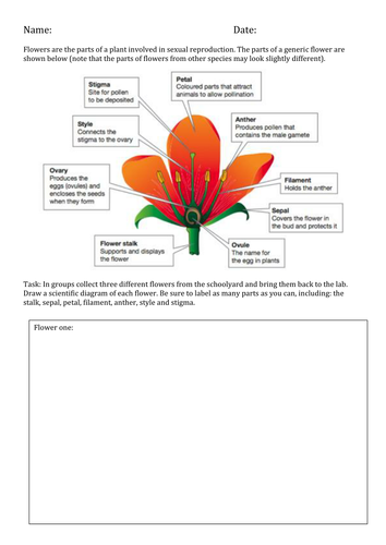 Plant Reproduction - Label the Parts of a Flower by ...
