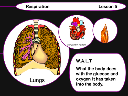 Lessons on the Lungs and Respiration