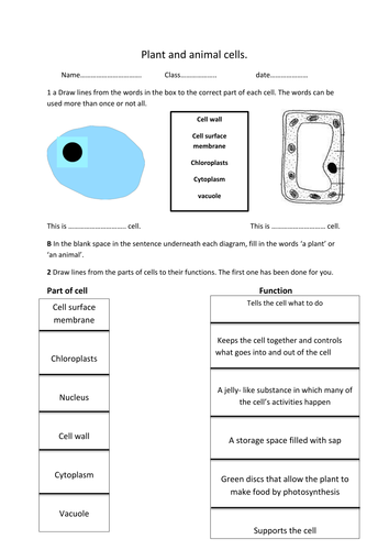 Plant and animal cell worksheet by rosie1999 - Teaching Resources - Tes