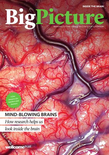 Big Picture: Inside the Brain