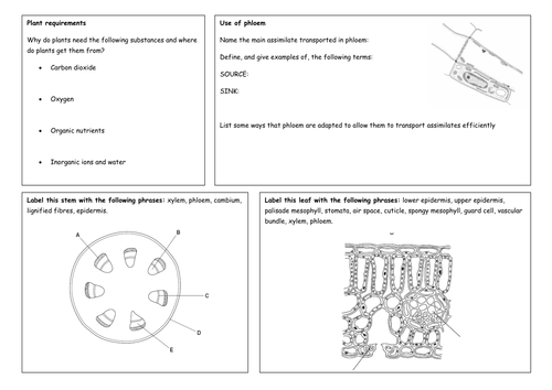 Transport in Plants by tonygraham50 Teaching Resources Tes – Xylem and Phloem Worksheet