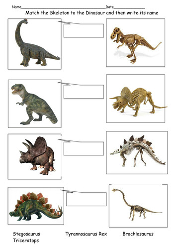 Match The Skeleton To The Dinosaur By Sc0user Teaching