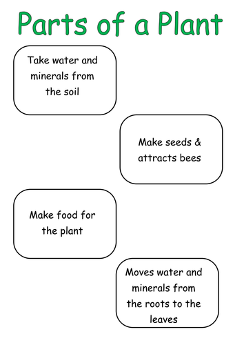 Parts Of A Plant By Aliciac86 Teaching Resources Tes