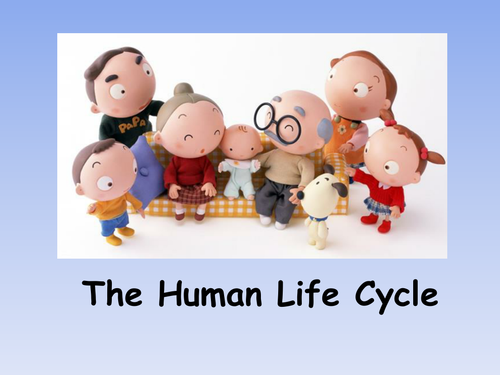 The Human Life Cycle - Powerpoint