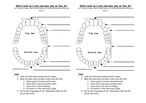 Teeth Unit Plan 6320656 on Number 15 Worksheet For Numbering Lesson