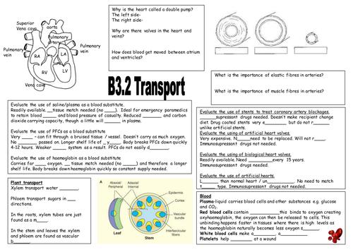 new aqa b3 2 transport revision sheet by sbrasier teaching resources. Black Bedroom Furniture Sets. Home Design Ideas