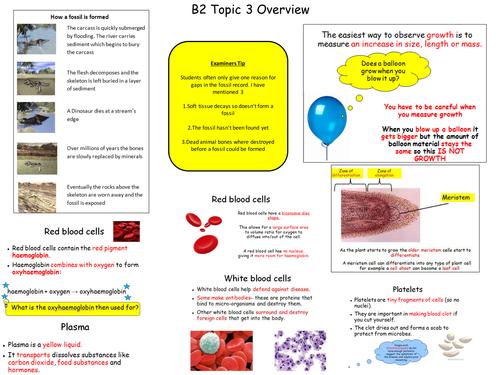 B2 topic 3 Edexcel Revision Map