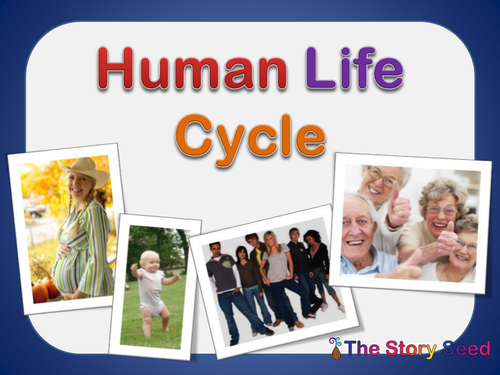 Life Cycle Nutrition - PowerPoint PPT Presentation
