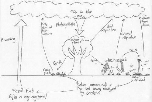 cartoon of carbon and nitrogen cycle