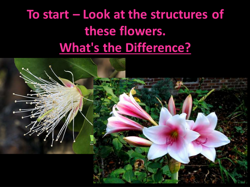 different flower structures plants flowers and pollination powerpoint by bevevans22