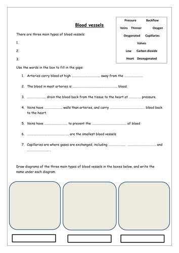 Blood vessels worksheets