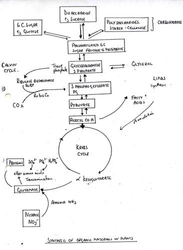 respiration revision diagram