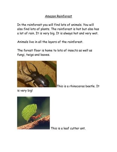 Rainforest factsheet