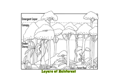 Current image pertaining to layers of the rainforest printable